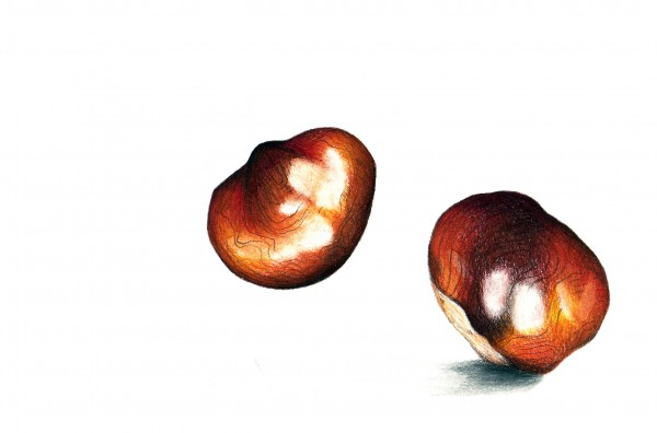 Couple of Conkers