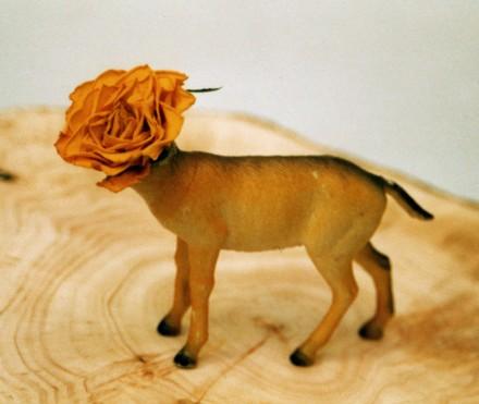 Flower 'Ed