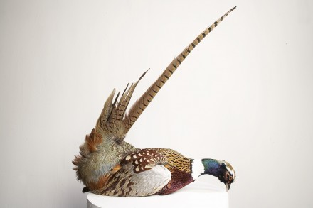 Rocking Pheasant
