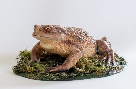 Common toad (cast)